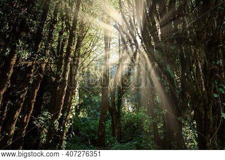 Natural Woodland And Lush Foliage At Sunrise, Beautiful Scene Of Nature Landscape With Morning Sunli