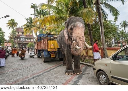 Fort Kochi, India - November 25, 2019: Temple elephant parked on the street in Fort Kochi, India. Street scene in Cochin, India