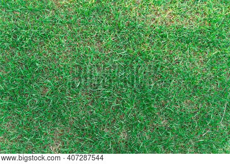 Trampled Lawn With Poor Sparse Grass, Grass Alternates With The Ground