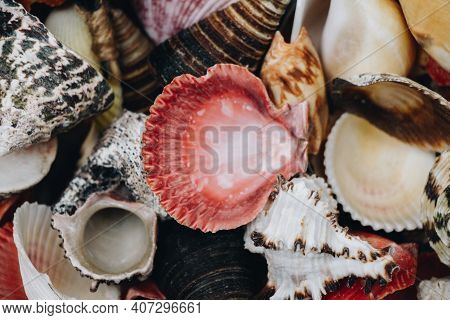 Natural Seashell Macro Texture. Seashells Background Texture.