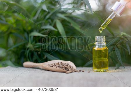 Hands Are About To Drip Cbd Hemp Oil, Hemp Seeds In A Wooden Spoon And Cbd Oil Salad Tablets On The