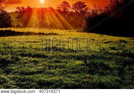 Grass In The Morning Dew On A Meadow On A Sunny Morning. Spring Season. Ukraine. Europe.