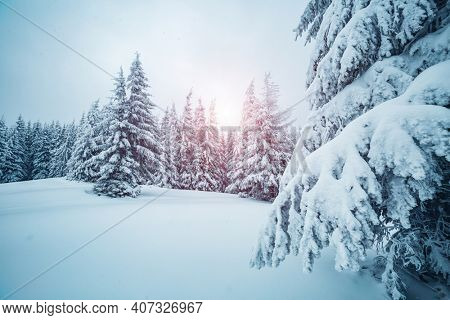 Picturesque view of snow-capped spruces on a frosty day. Location place of Carpathian mountains, Ukraine, Europe. Photo wallpapers. Fabulous nature image. Happy New Year! Discover the beauty of earth.