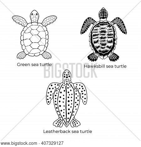 Set Of Black And White Vector Cliparts Of Green Sea Turtle, Hawksbill Sea Turtle And Leatherback Sea