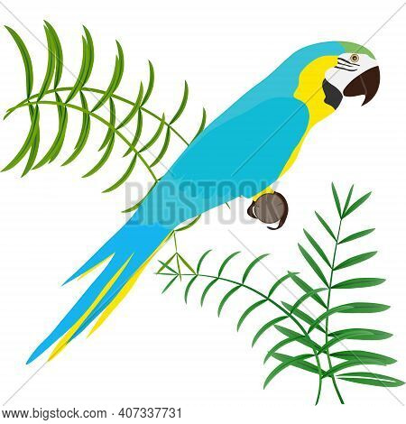 Parrot, Parrot With Palm Leaves Isolated On White. Vector Illustration. Vector.