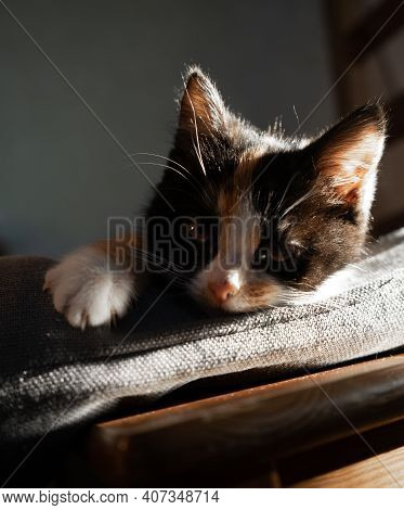 Small Kitten Lies On A Pillow On A Chair And Bask In The Sun.