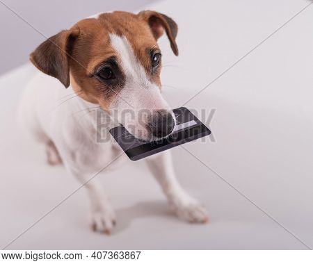 An Obedient Smart Dog Holds A Bank Card In His Mouth On A White Background