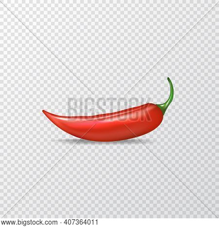 Red Hot Chili Pepper Realistic Vector Illustration. Red Hot Chili Pepper Lay On Transparent Backgrou