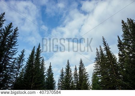 Silhouettes Of Fir Tops On Background Of Clouds. Atmospheric Minimal Forest Scenery. Tops Of Green C