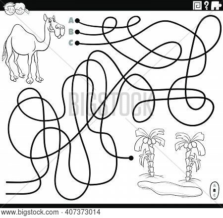 Black And White Cartoon Illustration Of Lines Maze Puzzle Game With Dromedary Camel Animal Character