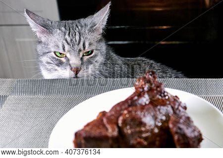 Cat Close-up Looks Irritably Over At Food. The Pet Is Angry At A Piece Of Fried Meat. Gray Cat Peers