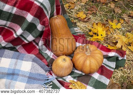Autumn Photozone. Fall Decorations. Plaid, Pumpkins, Leaves. In The Forest. Banner Or Greeting Card.