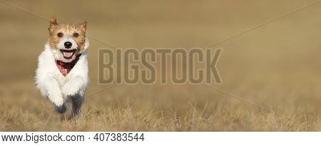 Playful Happy Smiling Pet Dog Puppy Running, Jumping In The Grass. Spring Summer Walk Concept, Web B