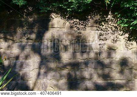 Green Leaves On Vintage Stone Wall Background. Text Place, Copyspace. Summer. Decorative Element For