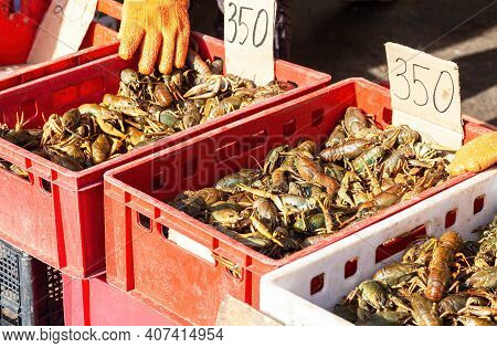 Live Crayfish In The Boxes At The Local Fermers Market Ready To Sale