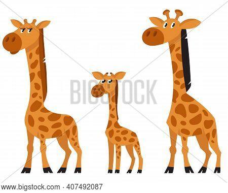 Giraffe Family Three Quarter View. African Animals In Cartoon Style.