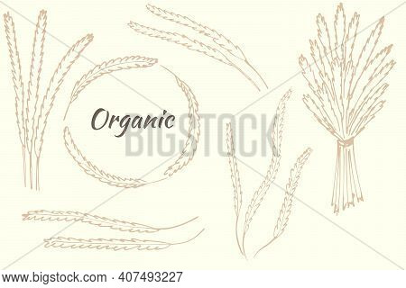 A Set Of Spikelets, Individual Spikelets And A Bouquet, A Rim Of Spikelets. Vector Herbs, Vintage. E