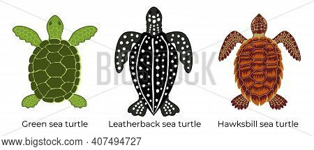 Vector Set Of Critically Endangered Sea Turtles. Three Colored Icons Of The Hawksbill Sea Turtle, Gr