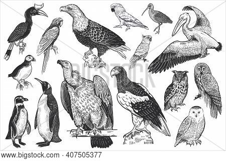 Birds Of Wildlife Set. Eagles, Owls, Parrots, Pelican, Penguins, Ibis, Puffin Isolated On White Back