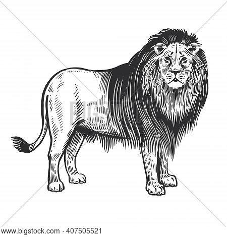 Lion. African Animal Isolated On White Background. Wildlife Object. Illustration Vector Art. Style V