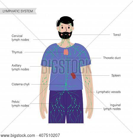Lymphatic System Concept. Lymph Nodes And Ducts In Male Silhouette. Tonsil, Thymus, Spleen In Man Bo