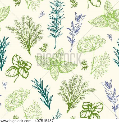 Vintage Hand Drawn Seamless Pattern With Provencal Spices And Herbs. Decorative Floral Vector Backgr