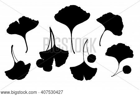 Vector Set Of Silhouettes Of Ginkgo Leaves With Berries. Medical Ginko Elements In Black Silhouette