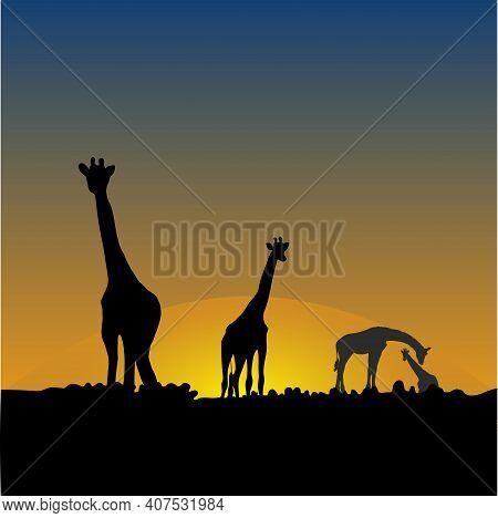 Giraffes In The African Savanna At Sunset
