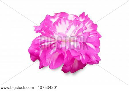 Fresh Pink Portulaca Oleracea Isolate On White Background.purslane, Common Purslane, Common Garden P