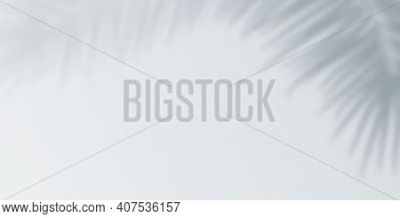 Realistic Tropical Shadow Overlay Effect On Concrete Wall Background. Blurred Transparent Soft Light