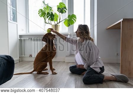 Happy Woman Owner With Her Vizsla Dog Playing With Tennis Ball At Home, Sitting On The Floor. Female