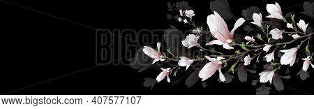 Realistic Flower, Magnolia Branch Isolated On Black Background. Magnolia Branch Is A Symbol Of Sprin