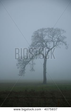 Tree In Misty Fog