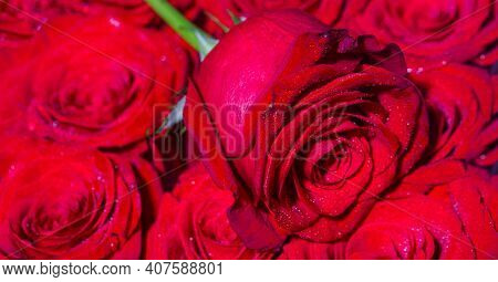 Bouquet Of Fresh Roses, Flower Bright Background. A Close Up Macro Shot Of A Red Rose. Flower Shop.