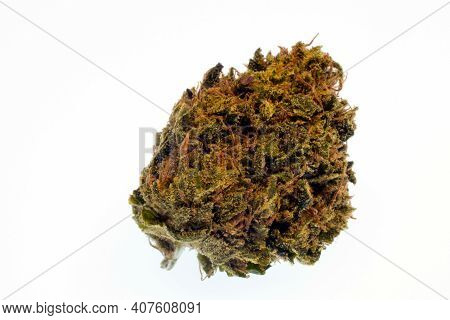 Marijuana Flower Bud, Close Up Isolated On A White Background. Mountain Girl Cross, With Plentiful O