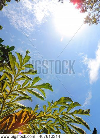 Copy Space Of Nature Green Blue Sky Sun Light Flare . Abstract Texture Background. Ecology, Environm