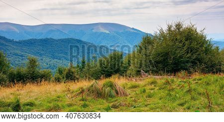 Beech Trees On The Grassy Hill. Beautiful Nature Scenery In Mountains. Carpathian Summer Landscape I