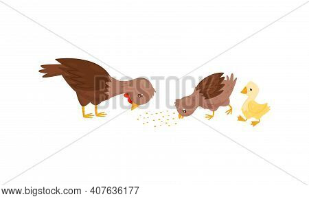 Feathered Hen And Baby Duckling As Farm Bird Walking In The Yard Vector Set