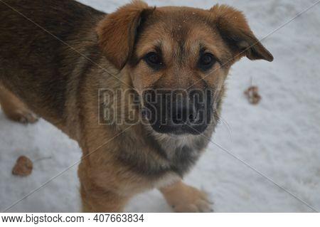 The German Shepherd Puppy. High Quality Photo
