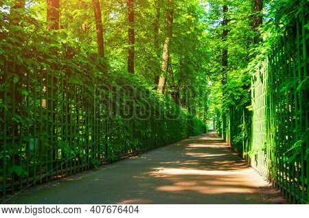 Summer park landscape, summer city park with metal fences and deciduous green summer trees. Summer garden in sunny summer day, summer scenic park, summer nature, summer landscape