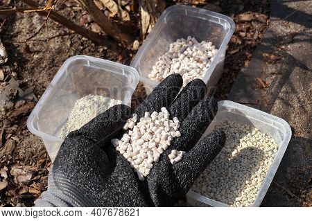 A Gloved Hand Filled With Plant Fertilizer. Fertilizing Plants In The Garden.