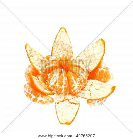 Tangerine Flower