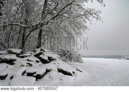 Winter Landscape. Fresh White Snow Lies On The Branches Of Bushes And Trees.