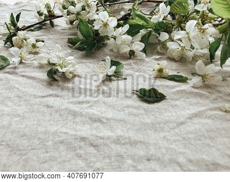 Spring Flowers On Rustic Linen Fabric. Cherry Blossoms, Petals And Leaves On Linen Cloth,  Space For