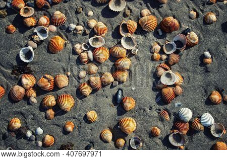 Top View Of Seashells Lying In The Sand. Seashell Background. Shells On The Sandy Beach.