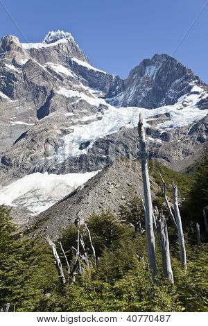 Vegetation Around A Glacier At Torres Del Paine