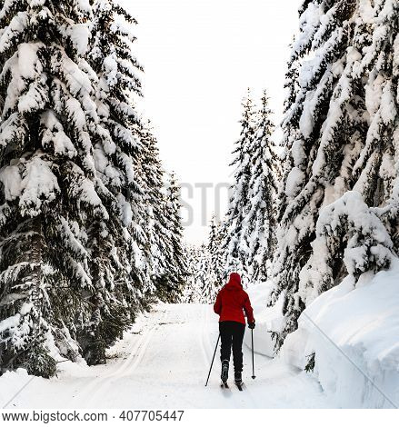 Person Cross Country Skiing Through An Idyllic Snowy Winter Forest.