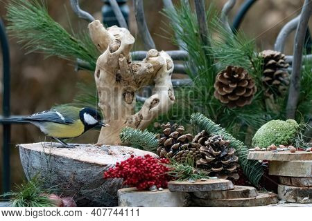 Great Tit Or Tit Is Eating Seeds. In A Natural Background, With Pine Cones, Red Berries, Branches An