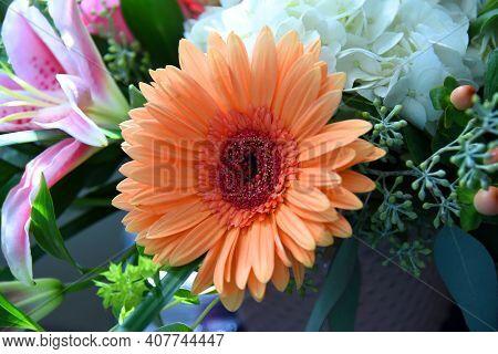 Gerber Daisy In Soft Peach