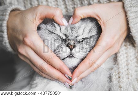 Woman Holding Her Lovely Fluffy Cute Cat Face And Making A Heart Shape With Her Hands. Love For The